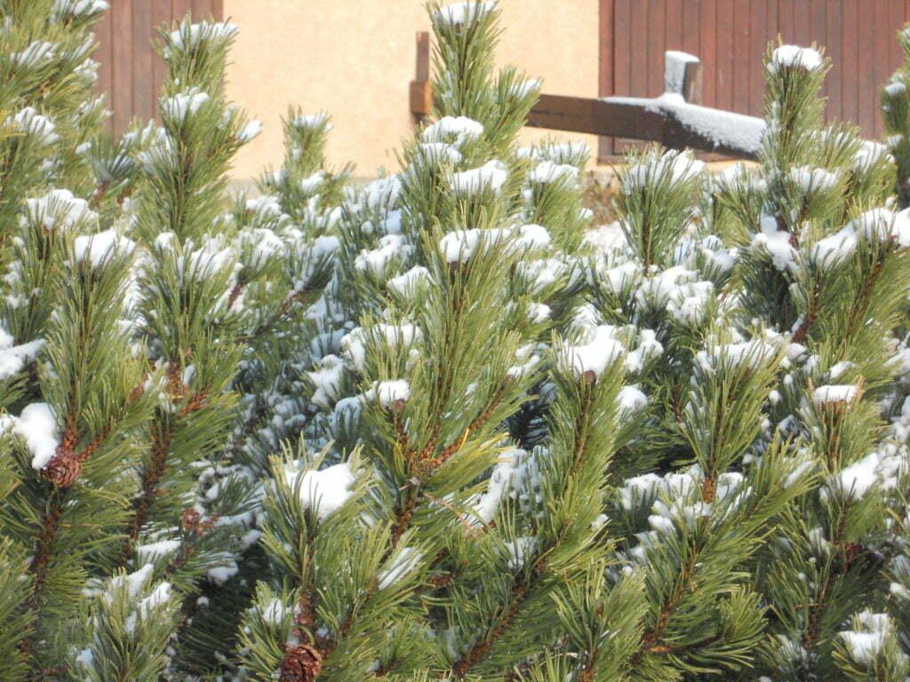 #ToutIraBien - #CetHiverJeSkie - Montgenèvre sera aux petits soins - Stations de Ski